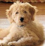 This page lists dogs and puppies for sale in Michigan along with stud ...